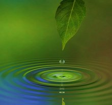 FAQ. Library Image: Leaf and Water
